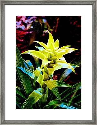 Green Bromeliad Framed Print by Sandra Pena de Ortiz
