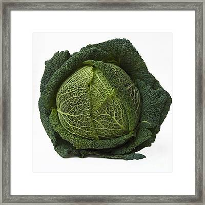 Green Cabbage Framed Print by Bernard Jaubert