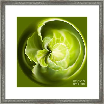 Green Cabbage Orb Framed Print by Anne Gilbert