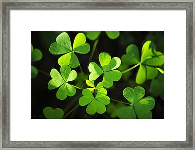 Green Clover Framed Print by Christina Rollo