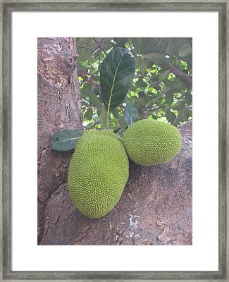 Green Exotic Fruit Framed Print by Elena Wells