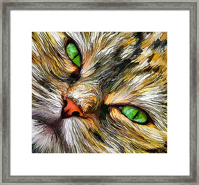 Green-eyed Tortie Framed Print by Bill Caldwell -        ABeautifulSky Photography