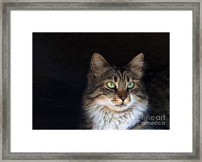 Green Eyes Framed Print by Stelios Kleanthous