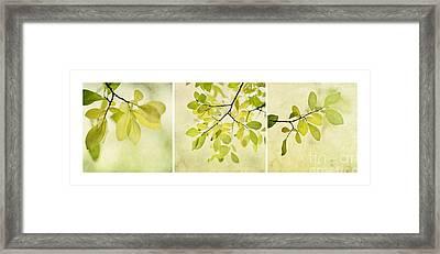 Green Foliage Triptychon Framed Print by Priska Wettstein
