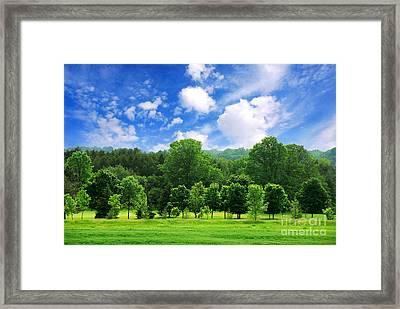 Green Forest Framed Print by Elena Elisseeva