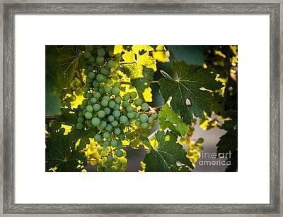 Green Grapes Framed Print by Ana V  Ramirez