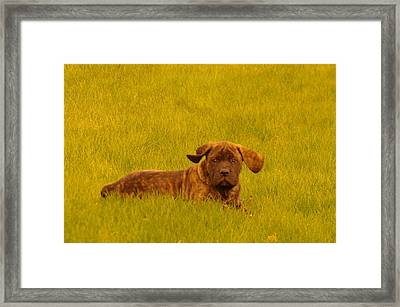 Green Grass And Floppy Ears Framed Print by Jeff Swan