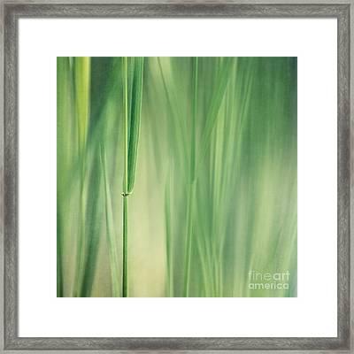 Green Grass Framed Print by Priska Wettstein