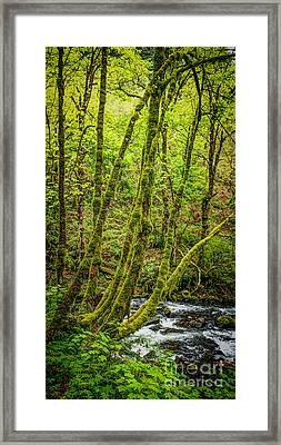 Green Green Framed Print by Jon Burch Photography