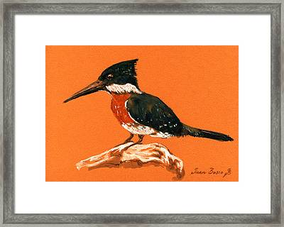 Green Kingfisher Framed Print by Juan  Bosco