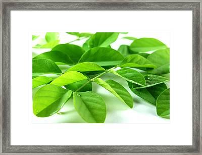 Green Leaf Background Framed Print by Aged Pixel