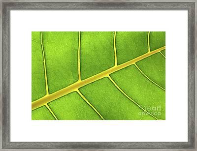 Green Leaf Close Up Framed Print by Elena Elisseeva