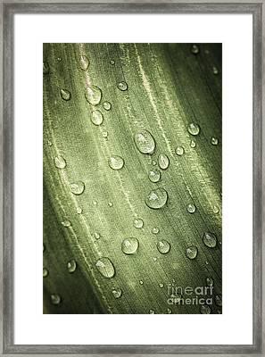 Green Leaf With Raindrops Framed Print by Elena Elisseeva