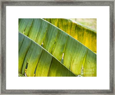 Green Leaves Series 14 Framed Print by Heiko Koehrer-Wagner
