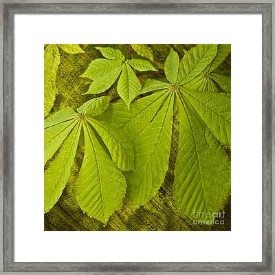 Green Leaves Series Framed Print by Heiko Koehrer-Wagner