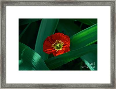 Green Loves Red Loves Green Framed Print by Byron Varvarigos