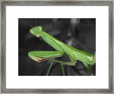 Green Mantis Framed Print by Shane Bechler