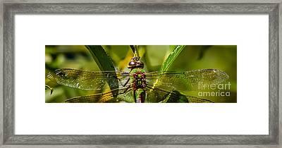 Green On Green Framed Print by Mitch Shindelbower