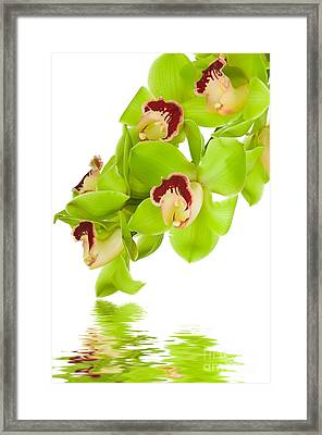 Green Orchid Framed Print by Boon Mee