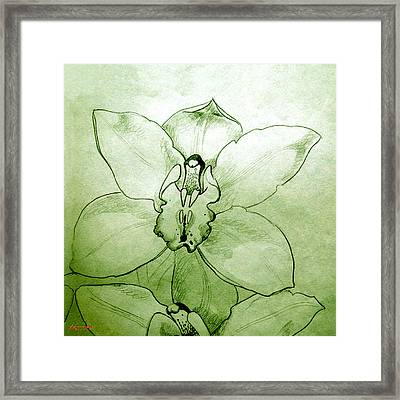 Green Orchid Framed Print by Patricia Howitt