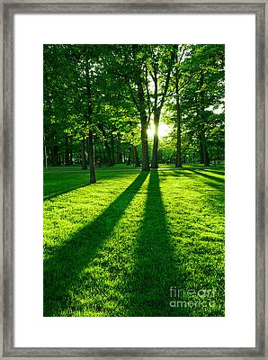 Green Park Framed Print by Elena Elisseeva