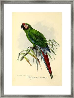 Green Parrot Framed Print by J G Keulemans