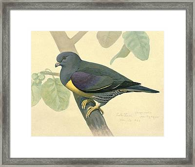 Green Pigeon Framed Print by Louis Agassiz Fuertes