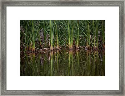 Green Reflections Framed Print by Linda Unger