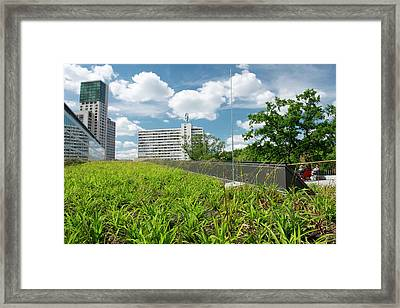 Green Roof Framed Print by Louise Murray