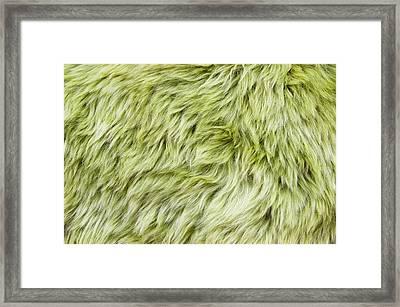 Green Sheepskin Framed Print by Tom Gowanlock