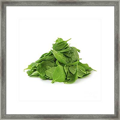 Green Spinach Framed Print by Elena Elisseeva