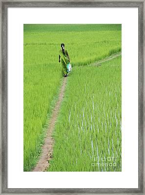 Green Framed Print by Tim Gainey