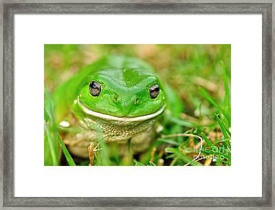 Green Tree Frog Framed Print by Kaye Menner