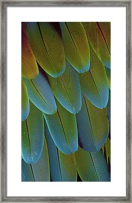 Green-winged Macaw Wing Feathers Framed Print by Darrell Gulin