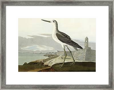 Greenshank Framed Print by John James Audubon