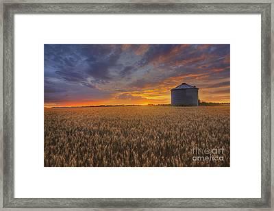 Greeting The Sun Framed Print by Dan Jurak