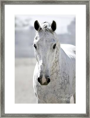 Grey Ghost Framed Print by Holly Martin