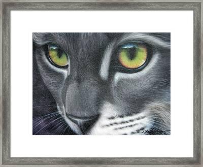 Grey Lady Framed Print by Darren Robinson