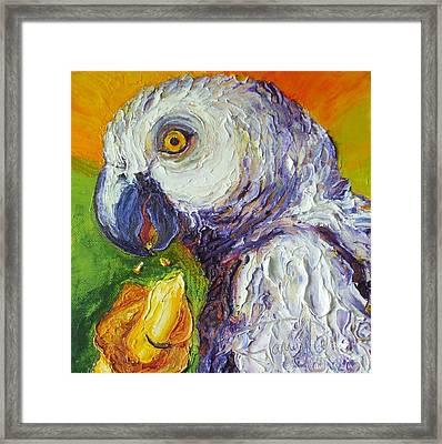 Grey Parrot And Juicy Mango Framed Print by Paris Wyatt Llanso