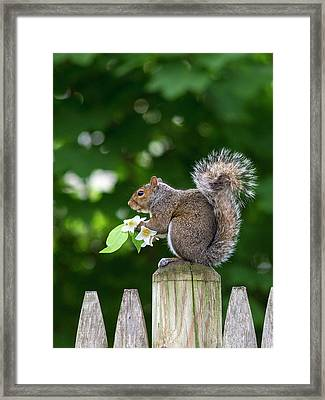 Grey Squirrel Framed Print by Babak Tafreshi