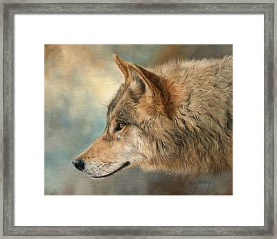 Grey Wolf 3 Framed Print by David Stribbling