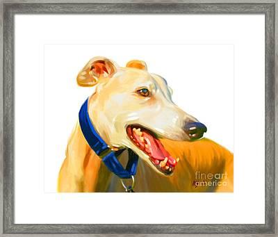 Greyhound Art Framed Print by Iain McDonald