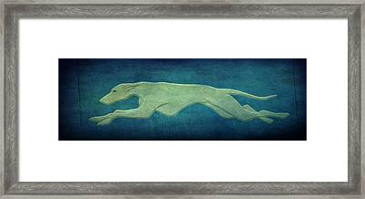 Greyhound Framed Print by Sandy Keeton