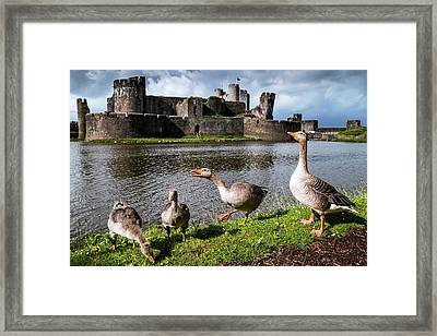 Greylag Geese And Caerphilly Castle Framed Print by Paul Williams