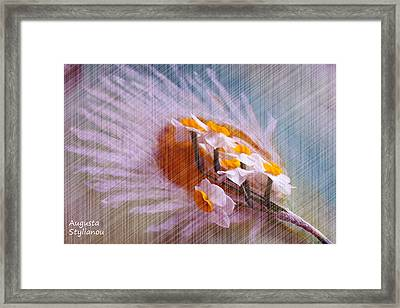 Grid Above Flowers Framed Print by Augusta Stylianou