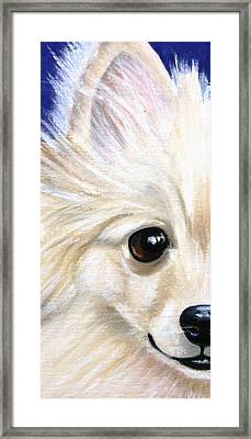 Grinning Pom Framed Print by Debbie Finley