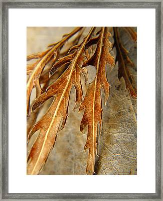Grip Of Winter Framed Print by Chris Berry