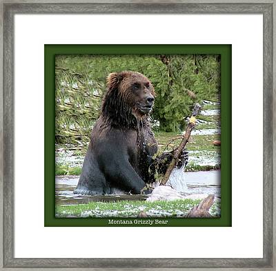 Grizzly Bear 07 Framed Print by Thomas Woolworth