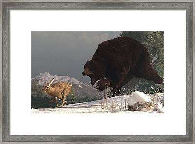 Grizzly Bear Chasing Rabbit Framed Print by Daniel Eskridge