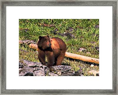 Grizzly Bear Framed Print by Robert Bales